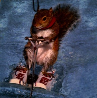 When Sienna meets Nick it's not the way it happens in love stories. It's because of a squirrel on water skis...